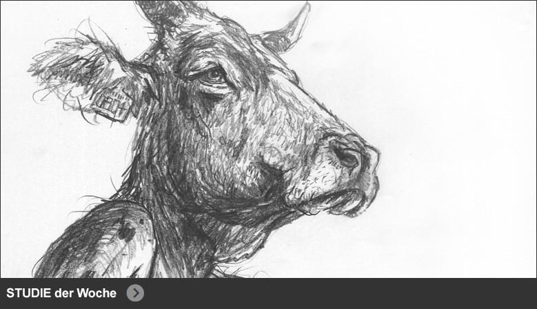 HUMAN ANIMALS | Studies
